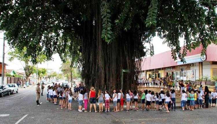 rua ipe jardim estrela:Abraço simbólico na Ficus elástica, árvore do Cariru tombada pelo